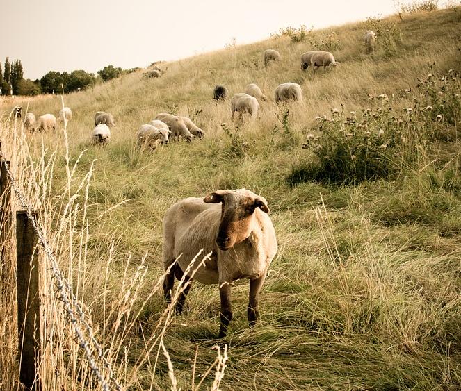 Erlebnisbauernhof NRW: Abenteuer auf dem Bauernhof